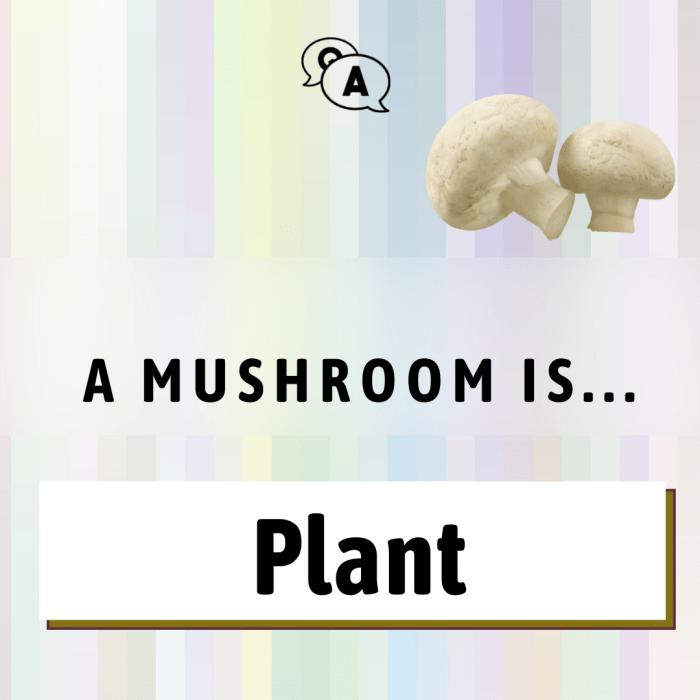 a mushroom is…