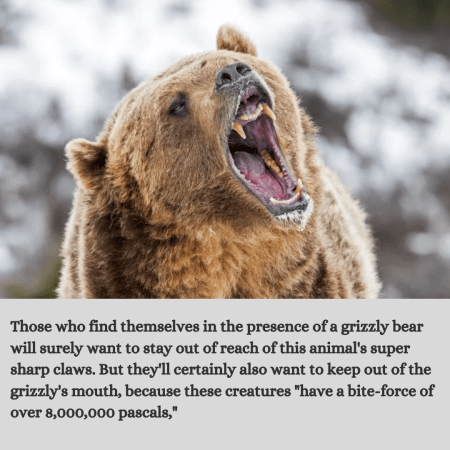 Those who find themselves in the presence of a grizzly bear will surely want to stay out of reac ...