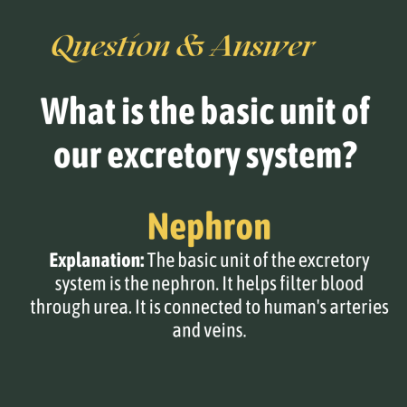 What is the basic unit of our excretory system?