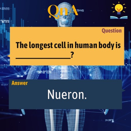 The longest cell in human body is _______________?