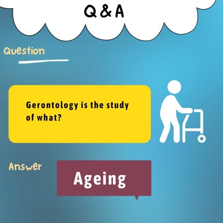 Gerontology is the study of what?