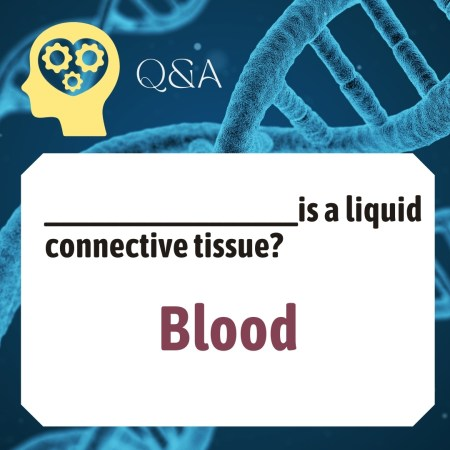 _________________is a liquid connective tissue?