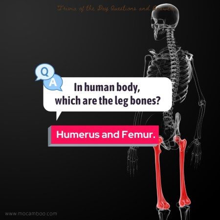 In human body, which are the leg bones?