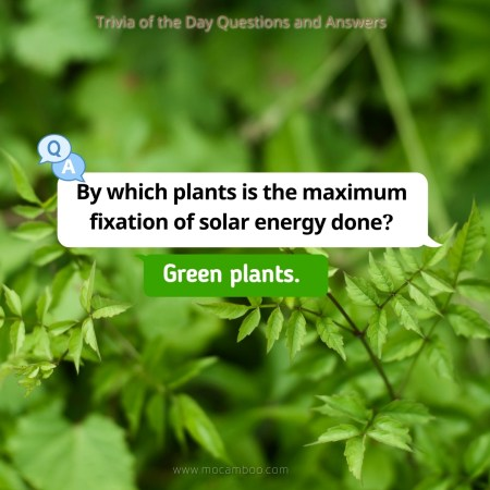 By which plants is the maximum fixation of solar energy done?