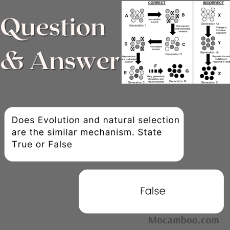 Does Evolution and natural selection are the similar mechanism. State True or False