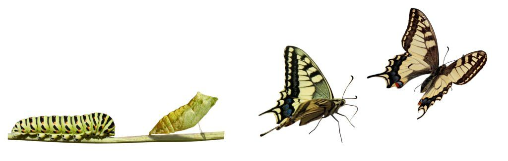 Júpiter en Escorpio 2017-2018: Transformación positiva