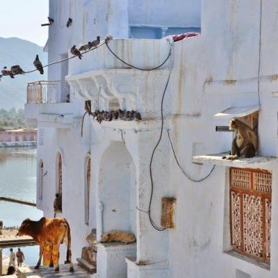 INDIA: TODA LA VERDAD