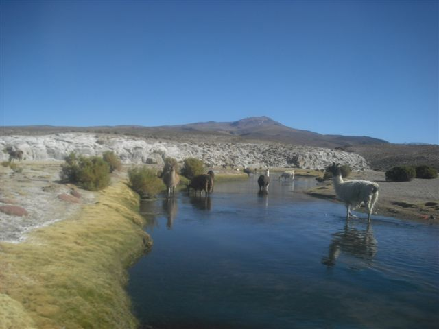 Llamas - Salar de Uyuni Bolívia