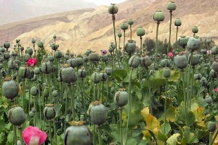 interesting facts about countries Afghanistan