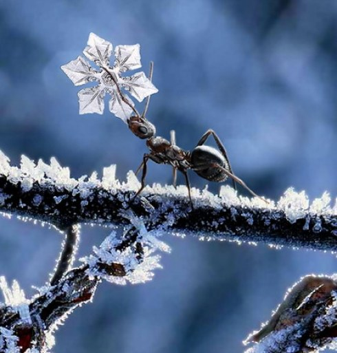 Frozen art by nature, snowflakes