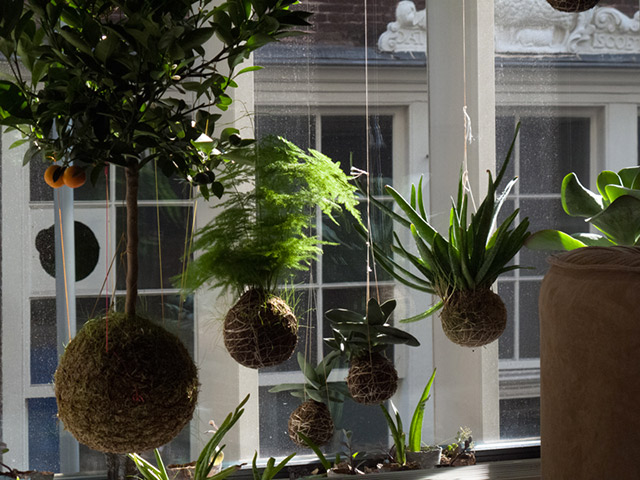 Esempio di string gardens.
