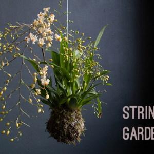 Come fare gli string gardens: spiegazioni con foto.