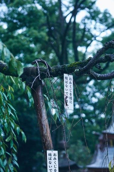 mango-tokio-9