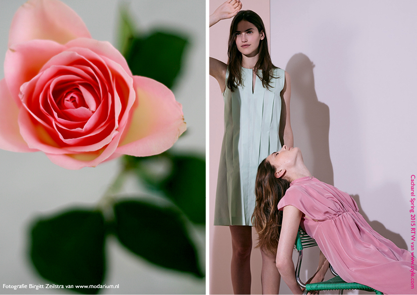 Modarium Think Pink moodboard 03 met een afbeelding uit de Spring 2015 RTW collectie van Cacharel en een roze roos