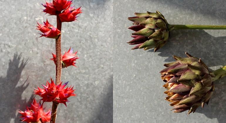 Modarium beeld voor wilde wonderen bloemen en planten trend 2016 moodboard 01 met Hohenbergia stellata en artisjok