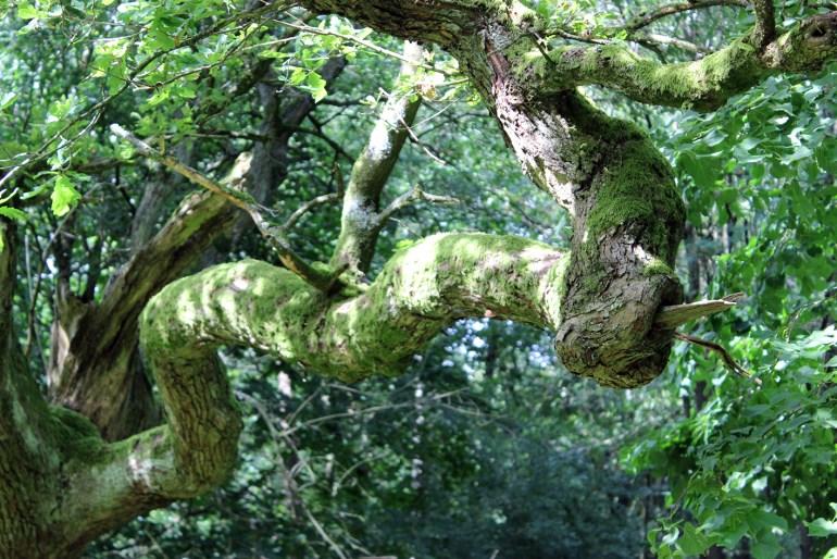 Modarium beeld van een boom bij het natuurmonument Externsteine bij Inspired by Nature scenario post gefotografeerd door Tristan Thiele