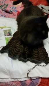 Wiggle Cat