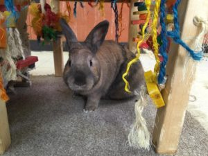 Worf The Bunny