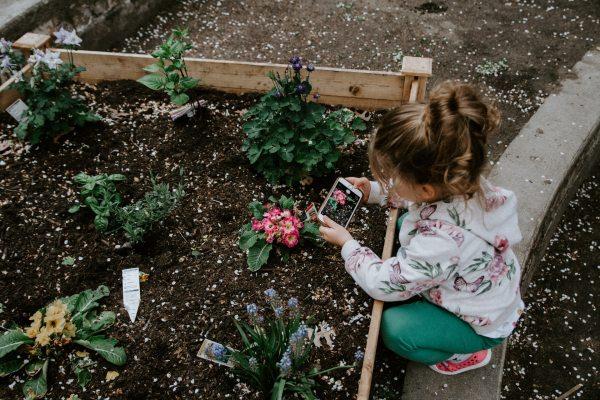 gardening, garden