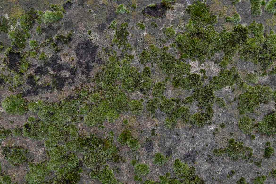 Moss on ancient stones