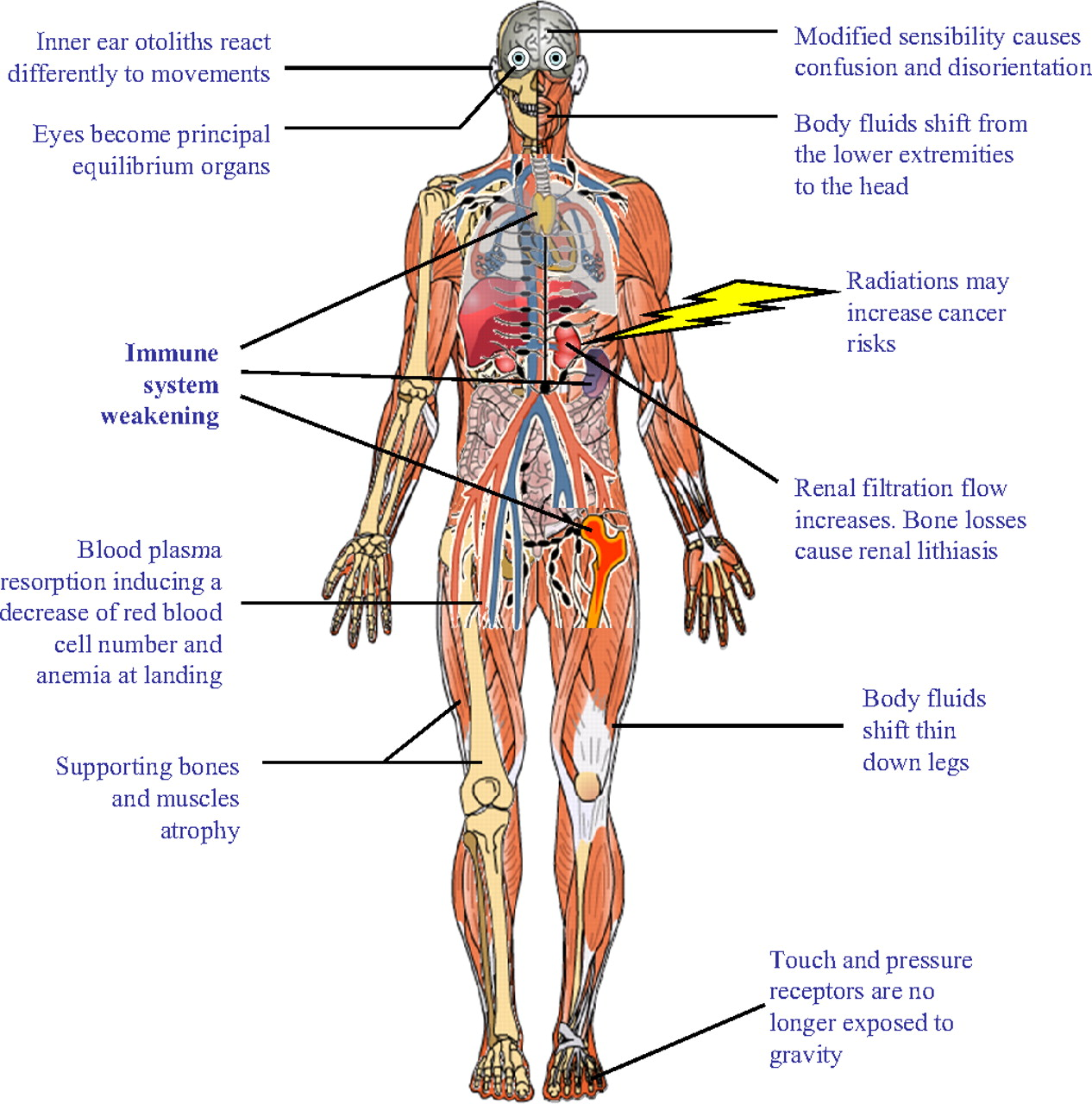 Human Body Systems And Functions