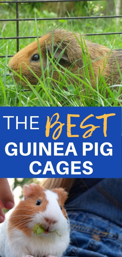 The Best Guinea Pig Cages Reviewed