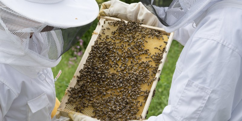 Best Beekeeping Suit Buying Guide 2018