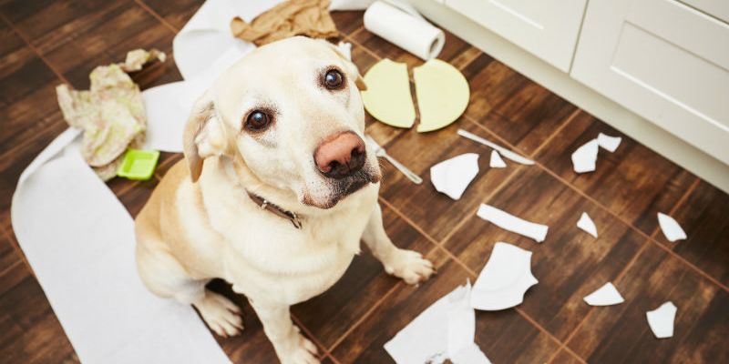 Choosing The Best Dog-Proof Trash Can for the Kitchen