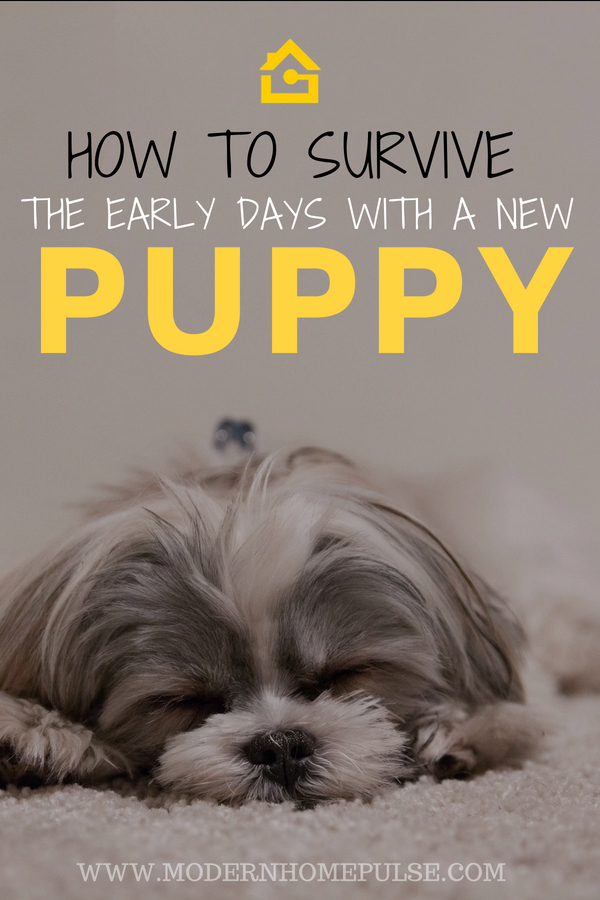 How to survive the early days with a new puppy! Check out our top tips to a stress free first few days with your cute new furry bundle of joy