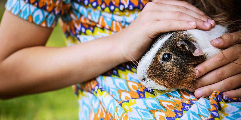 9 Reasons Guinea Pigs Make Good Pets for Your Kids