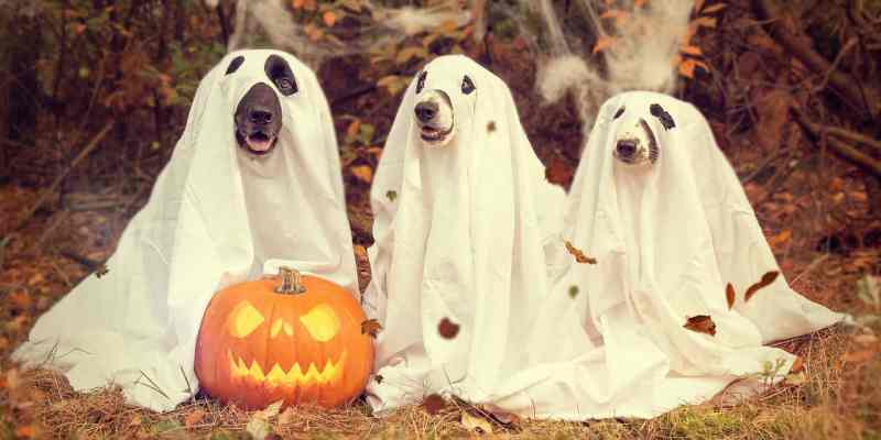dogs dressed up for halloween