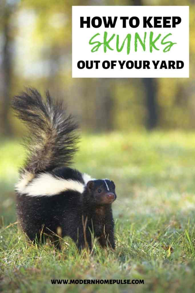Top tips to keep skunks out of your backyard