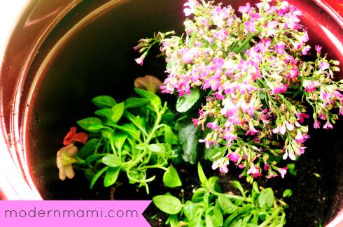 Flower Garden in a Pot
