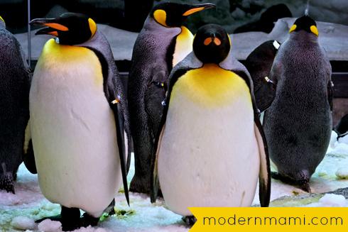 Penguins at SeaWorld Orlando