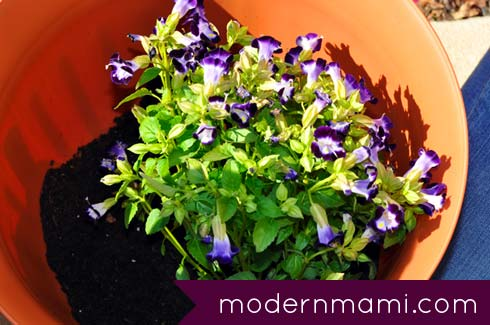 Tips for Gardening with Kids & How to Plant a Flower Pot