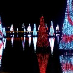 Top 5 Reasons to Visit SeaWorld's Christmas Celebration