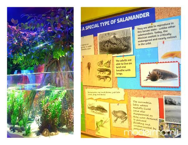 SEA LIFE Orlando Aquarium Axolotl Exhibit