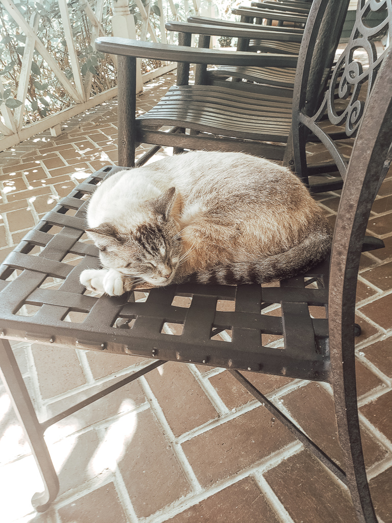Cute cat napping on chair on porch at Makers Mark