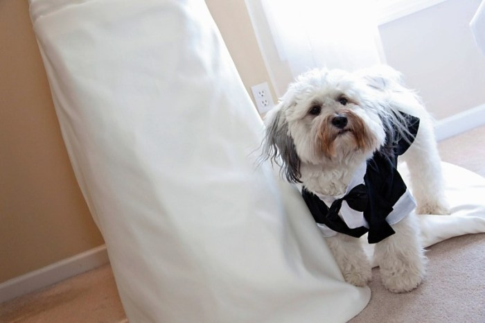 Riley sporting his tuxedo on our wedding day, August 15, 2009.