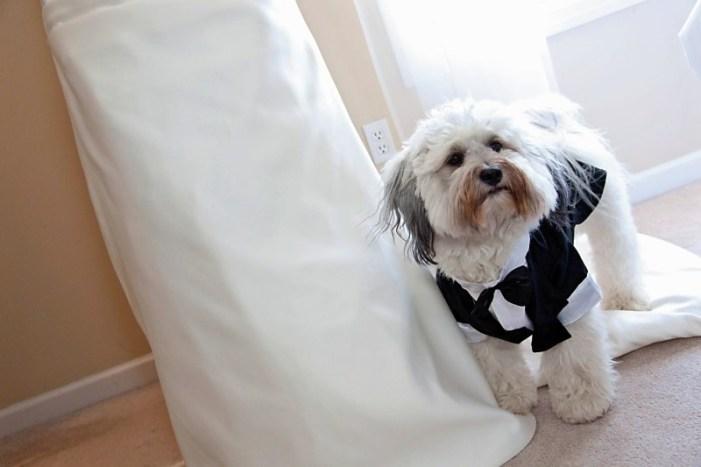 riley on dress