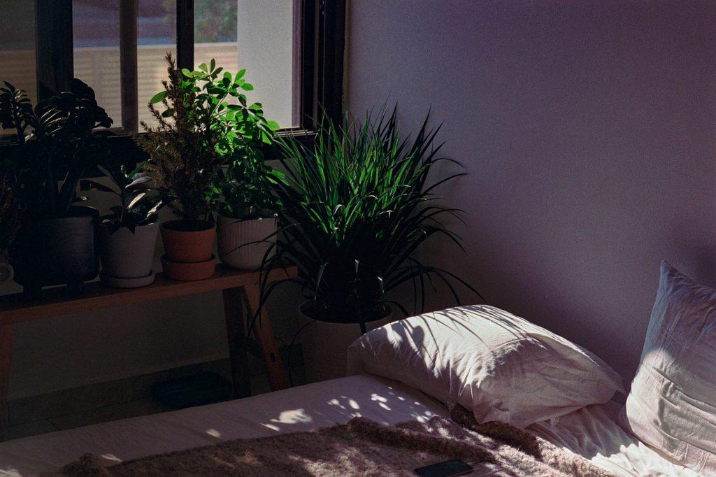 Hygge filozofija voli umirirujuće djelovanje biljaka.