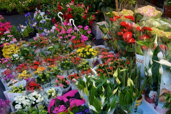 flowers at the Albenga Market
