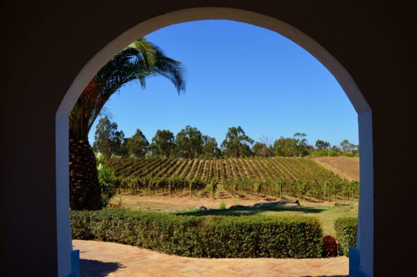 Grous Winery