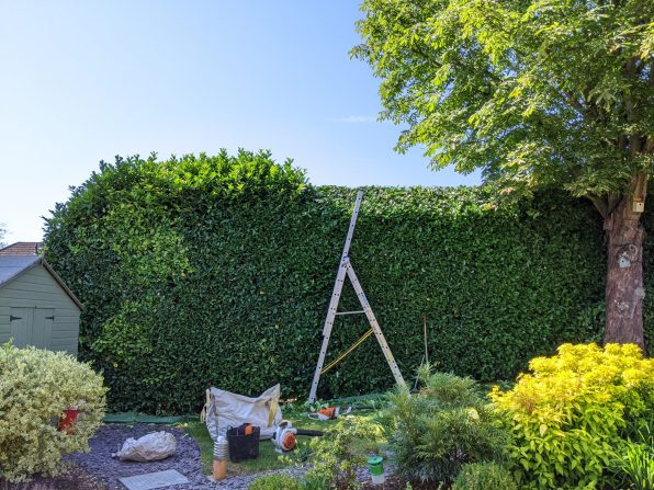 Hedge Reduction and Shaping Dunmow Essex