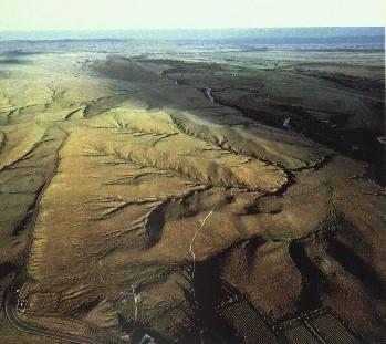 Custer's Field