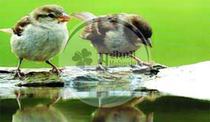 চড়ুই পাখির স্বজনপ্রীতি