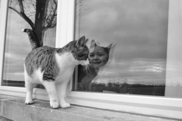 optical illusions find cat # 35