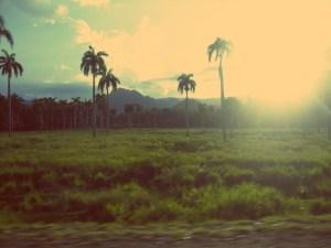 MojitoPapers: Palmen auf Kuba