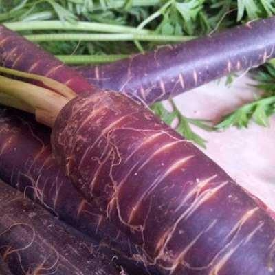 Purple Carrots.