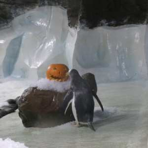 Sea Life Centre at Halloween.